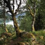 norwegen_20060026