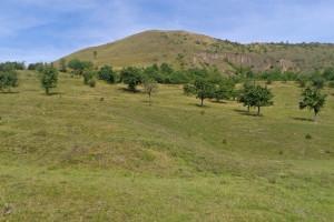 """Blick zum Rana, im Vordergrund die """"Zieselwiesen"""""""
